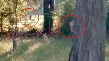 Encuentran fantasmas en un panteon con Google Maps