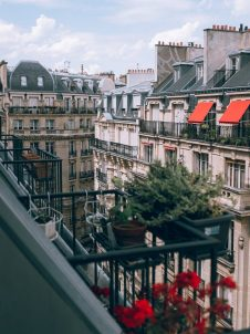 plant on a balcony