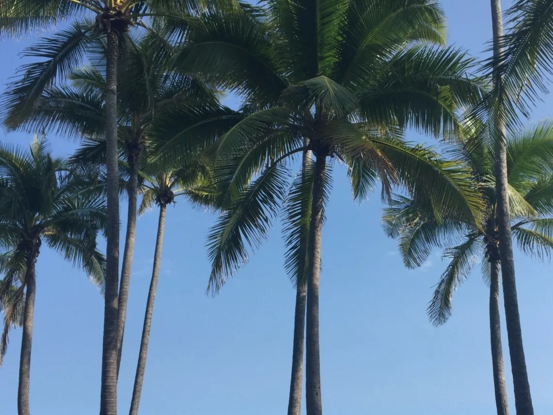palm trees against blue sky in Hawaii