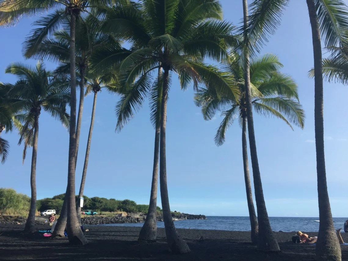 palm trees on black sand beach