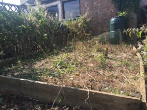 raised bed after weeds have been cut down