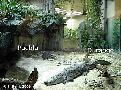 Puebla und Durango, 21. März 2009