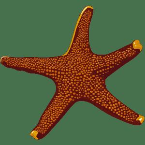 Estrella de mar - Ilustración en vectores