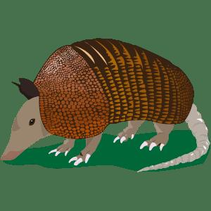 Armadillo - Ilustración en vectores