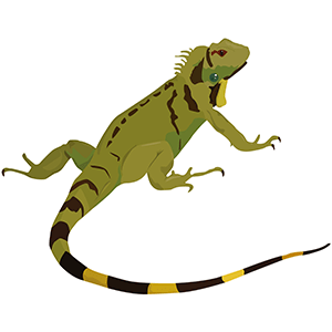 Iguana verde - ilustración en vectores