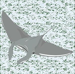 Mantarraya (Manta birostris) - Ilustración en vectores
