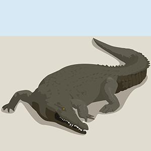 Cocodrilo - Ilustración en vectores