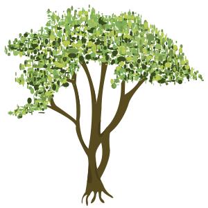 Mangle (avisennia bicolor)