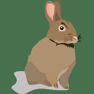 Conejo (Oryctolagus cuniculus) - Ilustración en vectores