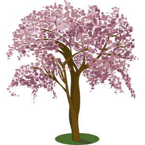 árbol apamate maculis