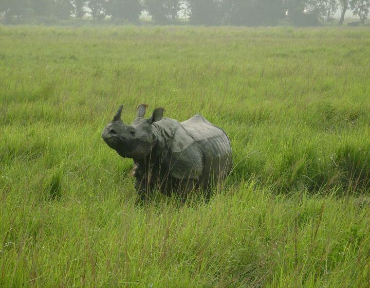 Single-Horned-Rhino-Kaziranga-National-Park