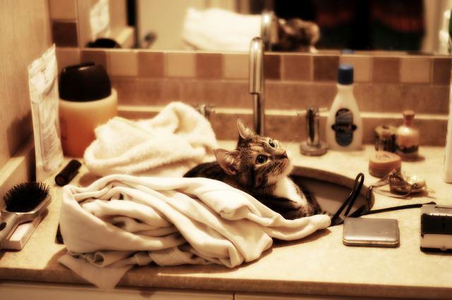 洗面台の猫