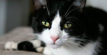 いぶかしむ猫