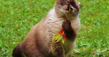 猫の運動不足解消