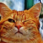 片目をつぶる猫