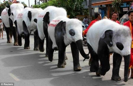 elephant-panda4