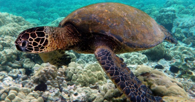 GRENADINES & TURTLES | BARBADOS TO TRINIDAD