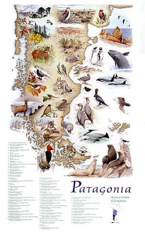Poster do filme Patagônia