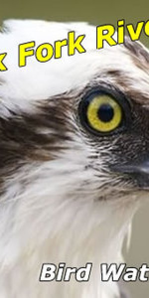bird-watching-missoula