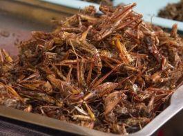 belalang goreng bikin alergi