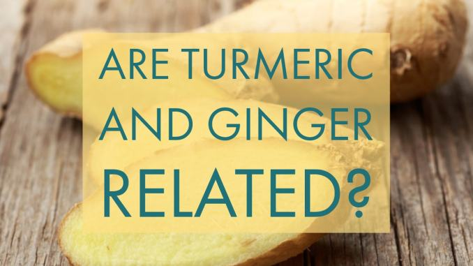 Are Turmeric And Ginger Related