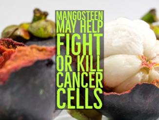 Fighting Cancer With Mangosteen