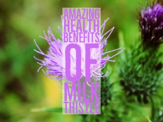 Amazing Health Benefits Of Milk Thistle