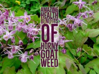 Health Benefits Of Horny Goat Weed