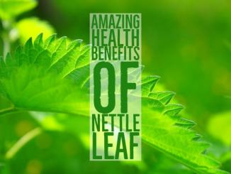 Amazing health benefits of nettle leaf