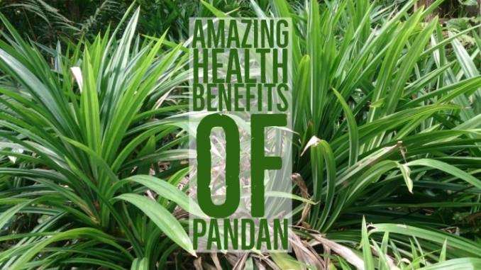 Amazing Health Benefits Pandan