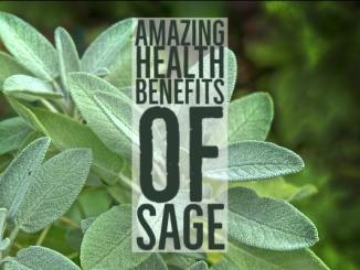 Amazing Health Benefits Sage