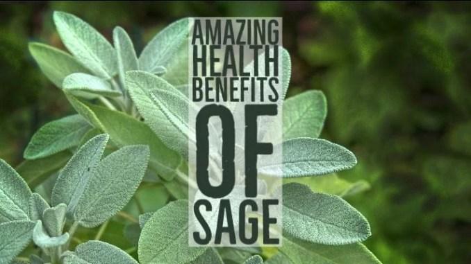 Amazing Health Benefits Sage
