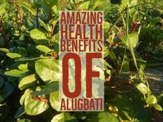 Amazing Health Benefits Alugbati