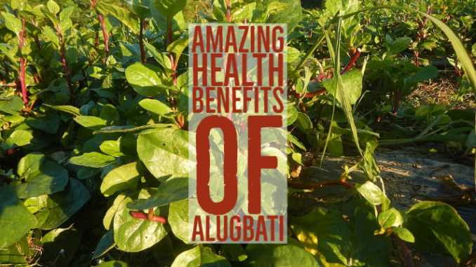 Amazing Health Benefits Alugbati