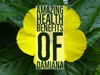 Amazing Health Benefits Damiana