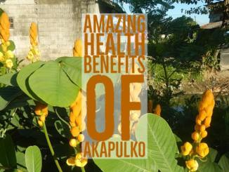 Amazing Health Benefits Akapulko