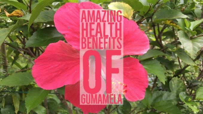 Amazing Health Benefits Gumamela