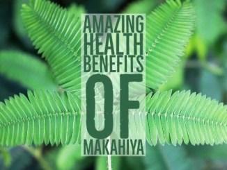 Amazing Health Benefits Makahiya