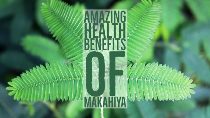 Amazing Health Benefits Makahiya