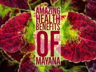 Amazing Health Benefits Mayana