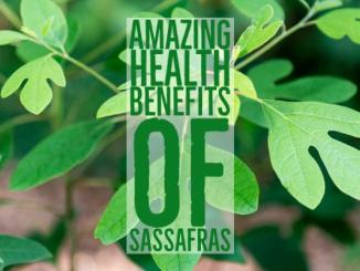Amazing Health Benefits Sassafras
