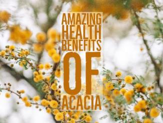 Amazing Health Benefits Acacia