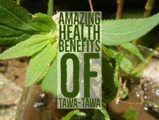 Amazing Health Benefits Tawa-Tawa