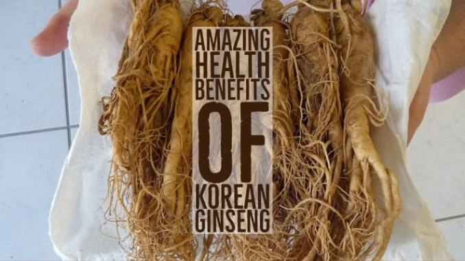 Amazing Health Benefits Korean Ginseng