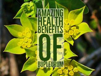 Amazing Health Benefits Bupleurum