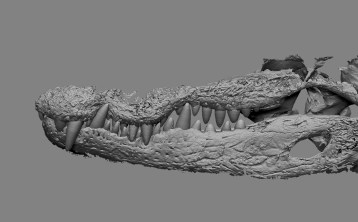 New Teeth in Large Jaw (Left Side)