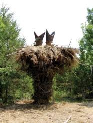 Bird Nest, 2012