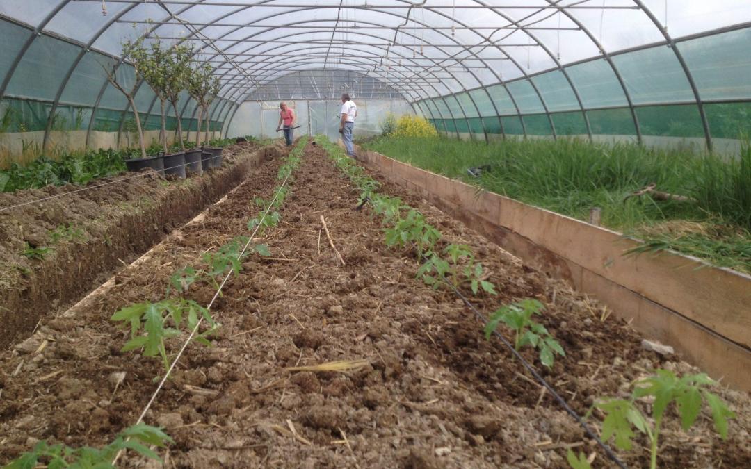 [ANNULÉ] Sam 21/03 : plantation de tomates