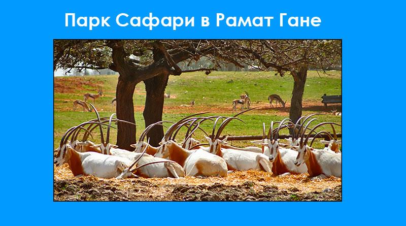 Израильский Парк Сафари