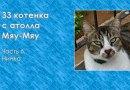 33 котенка с атолла Мяу-Мяу. Часть 6. Нинка